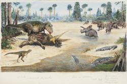 Nová vědecká studie ukazuje, že populární teropod Tyrannosaurus rex nebyl rozhodně vzácným a řídce se vyskytujícím dinosaurem. Představoval naopak jakýsi invazní druh, který se na pevnině Laramidie (západu Severní Ameriky) postupně rozšířil na území o rozloze přes 2 miliony kilometrů čtverečních. Zde idealizovaná podoba ekosystému v geologickém souvrství Hell Creek. Kredit: Petr Modlitba, ilustrace původně určená pro autorovu knihu Nová cesta do pravěku (nakladatelství CPress, Praha 2019).