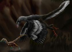 Moderní rekonstrukce obou teropodů, kteří již v 19. století zaseli první semínka dinosauří renesance, která ovšem vyklíčila až o století později. Větší Archaeopteryx lithographica zde loví mládě druhu Compsognathus longipes. Hypotetická scéna se odehrává na území dnešního Bavorska před 150 miliony let. Kredit: Durbed, Wikipedie