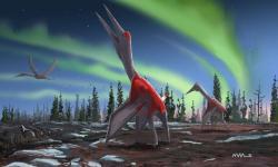 "Cryodrakon boreas přezdívaný""frozen dragon of the north winds"".  Kredit: David Maas"