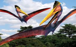 Moderní rekonstrukce kvecalkoatla, jednoho z největších létajících živočichů všech dob. Jakým způsobem se tento gigant s více než desetimetrovým rozpětím křídel a hmotností zhruba čtvrt tuny dostával do vzduchu, to je dosud ne zcela uspokojivě vyřešenou otázkou. Stejně jako jeho přibližně stejně velcí příbuzní Hatzegopteryx z Rumunska a Arambourgiania z Jordánska představoval tento severoamerický rod jednoho z posledních zástupců azhdarchidních ptakoještěrů. Kredit: Luis V. Rey (převzato z Reyova blogu)