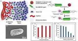 Technologie GM salmonel sprotinádorovými nanočásticemi. Kredit: Suh et al. (2018).