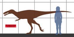 Mezi nejbližší vývojové příbuzné nově popsaného tyranosauroida patřil i jiný čínský zástupce tohoto kladu, Xiongguanlong baimoensis (na obrázku). Ten byl jinbeisaurovi značně podobný velikostí a nejspíš i celkovým tvarem těla, žil ale zhruba o 20 až 30 milionů let dříve. Kredit: Conty, Wikipedie (CC BY 3.0)