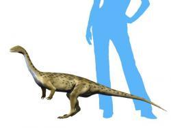 Rekonstrukce přibližného vzezření primitivního sauropodomorfa druhu Saturnalia tupiniquim. Tento malý masožravý či všežravý dinosaurus dosahoval délky kolem 1,5 metru a hmotnosti zhruba 10 kilogramů, nebyl tedy větší než malý pes. Žil na území současné jihoamerické Brazílie a afrického Zimbabwe v období raného svrchního triasu, asi před 233 miliony let. Kredit: Nobu Tamura; Wikipedie (CC BY-SA 4.0)