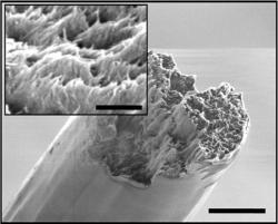 Nový nanomateriál pod rastrovacím EM. Kredit: KTH Royal Institute of Technology.