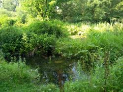 Velmi důležitou komponentou zvyšování odolnosti krajiny vůči globálním změnám je hospodaření s vodou. Tůňky v přírodní památce Meandry Lučiny. (Foto Vladimír Wagner).