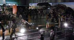 Představa souboje tyranosauridního teropoda druhu Zhuchengtyrannus magnus a ceratopsida druhu Sinoceratops zhuchengensis v podobě muzejní expozice koster těchto dinosaurů. Odehrávaly se však skutečně tyto souboje v době před zhruba 73 miliony let? Kredit: Kumiko, Wikipedie (CC BY-SA 2.0)
