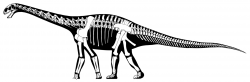 Moderní rekonstrukce kostry a siluety těla středně velkého sauropodního dinosaura druhu Cetiosaurus oxoniensis. Byl formálně popsán roku 1841 a stal se tak jedním z prvních historicky známých sauropodních dinosaurů. Richard Owen, který jej pojmenoval, však fosilie cetiosaura nejdříve považoval za pozůstatky jakéhosi obřího mořského plaza. Kredit: Jaime A. Headden; Wikipedie (CC BY-SA 3.0)