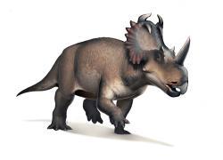 Rohatý dinosaurus druhu Centrosaurus apertus obýval oblasti dnešní kanadské Alberty v době před 76 miliony let. Podle nového výzkumu se v jeho fosilních kostech žádné původní proteiny nenacházejí, zato jsou ale vítaným útočištěm pro kolonie recentních mikroorganismů. Kredit: Fred Wierum; Wikipedie (CC BY-SA 4.0)