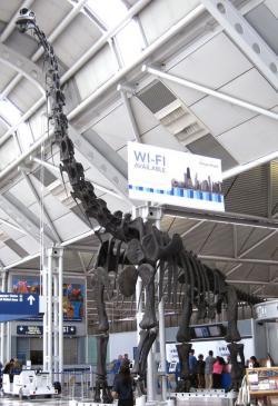 Snímek repliky kostry brachiosaura, původně součásti expozice v Chicago Field Museum, zde umístěné v prostorách O´Hareova mezinárodního letiště v Chicagu. Kredit: J. St. John, Wikipedie (CC BY 2.0)