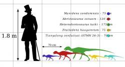 Velikostní porovnání dospělého člověka a některých zástupců čeledi Heterodontosauridae. Obecně se jednalo o velmi malé druhy, z nichž některé patřily k nejmenším známým ptakopánvým dinosaurům vůbec. Někteří jedinci nebyli o mnoho větší než současná vrána. Ani největší dosud objevené exempláře heterodontosauridů pak pravděpodobně nedosahovaly hmotnosti nad 10 kilogramů a celkové délky přes 2 metry. Kredit: PaleoGeekSquared; Wikipedie (CC BY-SA 4.0)