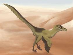Nezpochybnitelným hegemonem v počtu popsaných dinosauřích druhů ze svého území je dnes Čína. Jedním ze zhruba tří set známých čínských dinosaurů je například dromeosaurid Linheraptor exquisitus, popsaný roku 2010 z území čínské Autonomní oblasti Vnitřní Mongolsko. Tento asi 2 metry dlouhý a kolem 25 kg vážící teropod byl blízkým příbuzným slavnějšího velociraptora. Kredit: Smokeybjb, Wikipedie (CC BY-SA 3.0)