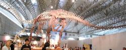 Dojem obří velikosti druhu M. sinocanadorum dodá replika jeho kostry, vystavená v muzeu. Délka tohoto dinosaura mohla přesahovat 35 metrů a hmotnost zřejmě překonávala 50 tun. Tím se tento jurský mamenchisaurid blížil největším titanosaurům, žijícím v pozdní křídě Jižní Ameriky. Kredit: Kumiko, Wikipedie (CC BY-SA 2.0)