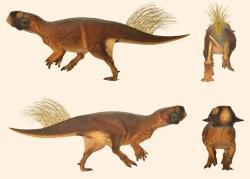 Nejspíš nejvěrnější představa o vzezření druhohorního dinosaura, jakou dnes máme k dispozici. Model psitakosaura zobrazuje jak jeho měkké tkáně a tělesné proporce, tak i vláknité výrůstky na ocase a celkové zbarvení těla. Kredit: Vinther et al., web Sci-news.