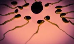 Spermie mají svůj kompas. K určení směru využívají termočidla i chemotaxi. Kredit: CC0 Public Domain