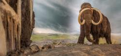 Model mamuta srstnatého v expoziciRoyal British Columbia Museumv kanadském městě Victoria (Britská Kolumbie). Tito mohutní chobotnatci byliskvěle anatomicky přizpůsobeníživotu ve velmi chladných podmínkách. I proto patřili k nejúspěšnějším živočichům žijícím v průběhu dob ledových.Kredit:Royal BC Museum.  https://royalbcmuseum.bc.ca/visit/exhibitions/natural-history-gallery1