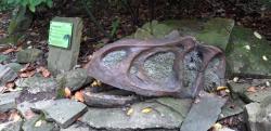 """Replika lebky alosaura v Zoologické zahradě Zlín (expozice """"Rostliny éry dinosaurů""""), která byla částečnou inspirací pro tento článek. Alosaurus patří již od konce 19. století k nejlépe známým a nejoblíbenějším teropodním dinosaurům, i když stejně jako všichni ostatní stojí ve stínu slavného """"T. rexe"""". Kredit: Vlastní snímek autora, 14. 8. 2019"""
