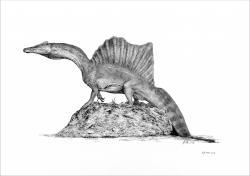 """Nové vzezření spinosaura podle aktuální vědecké studie, popisující ocasní část páteře mladého jedince, objeveného v sedimentech souvrství Kem Kem v Maroku. Spinosaurus byl podle nových zjištění prvním známým """"obojživelným"""" dinosaurem, a to přinejmenším v této velikostní kategorii. Ilustrace Vladimíra Rimbaly, použito s jeho svolením."""