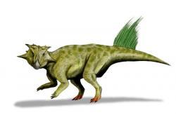Obrazová rekonstrukce přibližného vzezření jednoho z mnoha popsaných druhů rodu Psittacosaurus (P. sibiricus). Tento velmi rozšířený rod vývojově primitivního rohatého dinosaura žil v období rané křídy na rozsáhlém území východní Asie, a to v oblasti současné Číny, Mongolska, Laosu, Thajska i Ruského Dálného východu. Kredit: Nobu Tamura; Wikipedia (CC BY 3.0)