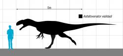 Zástupci rodu Asfaltovenator byli velcí teropodi, patřící ve svých ekosystémech k dominantním predátorům. Typový exemplář pravděpodobně dosahoval délky v rozmezí 7 až 8 metrů a velikostně se tedy vyrovnal například menším jedincům populárního severoamerického rodu Allosaurus. Kredit: Slate Weasel; Wikipedia (volné dílo)