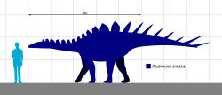 Velikostní porovnání dospělého člověka a průměrně velkého exempláře druhu Dacentrurus armatus. Největší zástupci tohoto stegosaurida mohli být dlouzí i přes 10 metrů a vážili patrně více než 7 tun. Jsou tak největšími dnes známými stegosauridy vůbec. Kredit: Slate Weasel; Wikipedia (volné dílo).