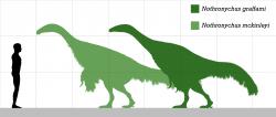 Velikostní porovnání obou známých druhů rodu Nothronychus s dospělým člověkem. Při délce přes 4 metry a hmotnosti kolem 800 kilogramů představovali notronychové poměrně velké tvory o velikosti mohutného koně. Na poměry druhohorních dinosaurů však byli spíše menšími zástupci tehdejší megafauny. Kredit: PaleoNeolitic; Wikipedia (CC0).