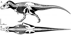 """FMNH PR 2081 (""""Sue"""") je stále nejkompletnějším objeveným jedincem druhu Tyrannosaurus rex, a to s kompletností dochování kolem 80 %. S možnou výjimkou kanadského exempláře s přezdívkou """"Scotty"""" se také jedná o největšího a nejmohutnějšího zástupce tohoto druhu. Při délce kolem 12,3 metru a výšce hřbetu 3,7 metru vážil tento mohutný teropod asi 8000 až 10 000 kilogramů. Kredit: Scott A. Hartman; Wikipedie (CC BY 4.0)"""