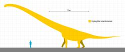 Přibližná velikost a tvar těla mamenchisauridního sauropoda druhu Xinjiangtitan shanshanensis. Při délce kolem 30 metrů vážil tento obří býložravec asi 25 až 40 tun. Jeho krk s minimální délkou 13,4 metru je patrně nejdelším potvrzeným krkem u všech dosud známých živočichů. Někteří sauropodi mohli mít tuto část těla ještě o několik metrů delší, u žádného z nich se nám ale nedochovala dostatečně kompletní část cervikální páteře. Kredit: Slate Weasel; Wikipedia (volné dílo)