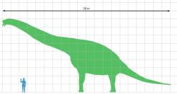 Size comparison of adult and Giraffatitan brancai species.  Although at 30 to 40 tons of live weight, it was far from the largest and most massive sauropod dinosaur, its dimensions were still astounding.  For example, he would look comfortably at the windows of the fourth floor of the panel period.  Credit: Matt Martyniuk;  Wikipedia (CC BY 3.0)