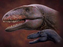 Ulughbegsaurusbyl zhruba dvakrát delší a čtyřnásobně těžší než dosud největší známý teropod ze sedimentů souvrství Bissekty, tedy tyranosauroid druhuTimurlengia lengi. O rozdílu ve velikosti však lépe než čísla vypovídá tento obrázek. Velcí tyranosauridi se objevili zhruba až o 10 milionů let později (a nejslavnější z nich až o víc než 20 milionů let později), na území Uzbekistánu tak před 90 miliony lety stále dominovali karcharodontosaurní teropodi.Kredit:Julius T. Csotonyi.