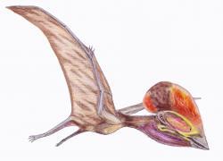 Bakonydraco galaczi byl tapejaridní pterodaktyloid, žijící v období geologického věku santon (asi před 85 miliony let) na území dnešního Maďarska. Jeho fosilie byly popsány roku 2005 a přispěly k lepšímu pochopení biodiverzity ptakoještěrů v období pozdní křídy. Vzdálení příbuzní tohoto středně velkého evropského ptakoještěra žili ještě téměř o dvacet milionů let později, tedy na samotném konci křídové periody. Kredit: Dmitrij Bogdanov; Wikipedia (CC BY 3.0)
