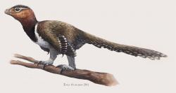 """Jak moc ptačí už je """"dost"""" ptačí? V Rumunsku objevený dromeosaurid (?) Balaur bondoc mohl být ve skutečnosti velkým býložravým ptákem, obývajícím východní Evropu v době před 70 miliony let. Kredit: Emily Willoughby, CC BY-SA 4.0 (Wikipedie)"""