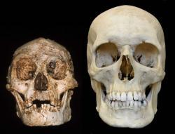 Nalevo hobit, napravo moderní člověk. Kredit: Peter Brown / University of New England.