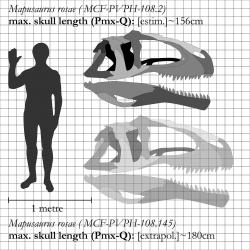 """Možná jedna z největších známých lebek suchozemského predátora vůbec. U typového exempláře druhuMapusaurus roseaeměří lebka na délku """"jen"""" 156 cm, u většího jedince, známého pouze z kosterních fragmentů, však mohla být dlouhá kolem 180 cm. Je tedy docela dobře možné, že časem objevíme i dvoumetrovou lebku některého z obřích karcharodontosauridů.Kredit:Ornitholestes (Wikipedie; CC BY 3.0)"""