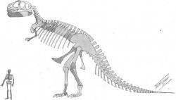 """první publikovaná rekonstrukce kostry druhu Tyrannosaurus rex od William D. Matthewa z roku 1905. V této době se ještě Henry F. Osborn domníval, že materiál AMNH 5866 je odlišný od exempláře z východní Montany a představuje tak samostatný rod a druh obřího dravého dinosaura """"podobného ceratosaurovi"""". Kredit: Wikipedie (volné dílo)"""