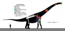 Brachiosaurus altithorax byl obří sauropodní dinosaurus, jehož délka je odhadována až na 26 metrů, výška na 13 metrů a hmotnost zhruba na 30 až 60 tun. Nebyl tedy největším známým dinosaurem, ale patřil mezi obří druhy, jejichž anatomie a fyziologie musela být přísně uzpůsobena jejich gigantickým rozměrům. Brachiosauři žili v období pozdní jury (asi před 153 miliony let) na území Severní Ameriky, velmi podobné a blízce příbuzné druhy sauropodů však obývaly také tehdejší západní Evropu a východní Afriku. Na ilustraci jsou zobrazeny dosud známé skeletární části různých exemplářů druhu B. altithorax. Kredit: Slate Weasel; Wikipedie (CC BY 4.0)
