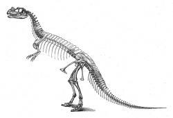 Zastaralá rekonstrukce kostry ceratosaura v podání Charlese Othniela Marshe, který tohoto dinosaura v roce 1884 formálně popsal. Neodpovídající je vzpřímená pozice těla a také nadměrný počet hrudních obratlů, který výrazně prodlužuje trup dinosaura. Kredit: O. C. Marsh; Wikipedie (volné dílo)