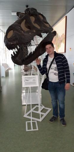 Na Přírodovědecké fakultě Univerzity Palackého v Olomouci se můžete setkat s jedinou anatomicky propracovanou českou replikou lebky tyranosaura, a to právě exempláře AMNH 5027. Lebka má reálnou velikost (délku kolem 136 cm) a její rozměry jsou při pohledu zblízka skutečně impozantní. Kredit: Vlastní snímek (autorem M. Matějka), 9. 4. 2019