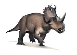 U některých ptakopánvých dinosaurů, jako byl například ceratopsid Centrosaurus apertus, byly hyoidní kosti anatomicky komplexnější, než u teropodních dinosaurů. To znamená, že i jejich jazyk byl nejspíš pohyblivější a flexibilnější. Důvodem mohla být potřeba efektivnějšího mechanického zpracování tuhé rostlinné potravy. Kredit: Fred Wierum, Wikipedie (CC BY-SA 4.0)