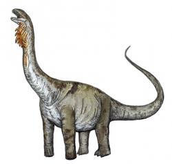Přímým současníkem jinbeisaura byl také středně velký sauropodní dinosaurus z čeledi Euhelopodidae Huabeisaurus allocotus, formálně popsaný roku 2000. Při délce kolem 20 metrů a hmotnosti asi 15 tun nebyl dospělý exemplář snadným úlovkem ani pro smečku jinbeisaurů (pokud lovili ve větším počtu). Spíše se tak asi zaměřovali na mláďata tohoto velkého sauropodního býložravce. Kredit: FunkMonk; Wikipedie (CC BY-SA 3.0)
