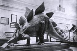 Dnes již silně zastaralý model stegosaura, vytvořený americkým výtvarníkem Charlesem R. Knightem v roce 1903 (zde upravená verze z následujícího desetiletí). Model byl poplatný skromným a nepřesným poznatkům tehdejší doby. Velmi podobně vypadal o půl století později i stegosaurus, kterého jsme mohli obdivovat ve filmu Cesta do pravěku. Kredit: Charles W. Gilmore a Charles R. Knight; Wikipedie (volné dílo)