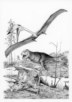 Tyranosauři byli velmi početní, vývojově progresivní, ekologicky dynamičtí a troficky dominantní vrcholoví predátoři. V ekosystémech obývaných těmito obřími teropody nezbylo místo pro žádné další středně velké až velké dravé dinosaury. Nejspíš i díky tomu se v průběhu jejich existence mohlo objevit až kolem 2,5 miliardy jedinců, reprezentujících tento živočišný druh. Kredit: Vladimír Rimbala, ilustrace k autorově knize Poslední dny dinosaurů (nakladatelství Radioservis, Praha 2016).