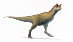 Karnotauři byli štíhle stavění teropodi, kteří i při délce 9 metrů nedosahovali hmotnosti vyšší než zhruba dvě tuny. Dokázali patrně velmi rychle běhat, sráželi se možná hlavami při ritualizovaných soubojích a mohli mít sklony k životu ve skupinách i k občasnému kanibalismu. Charakteristická pro ně byla také velmi krátká a vysoká hlava a zakrnělé přední končetiny. Kredit: Fred Wierum, Wikipedie (CC BY-SA 4.0)