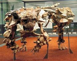 """Ankylosauridi, jako je i kosterní exemplář tohoto asijského pozdně křídového druhuPinacosaurus grangeri(zde s lebkou holotypu druhuSaichania chulsanensis), měli vůbec nejvyšší relativní hustotu těla mezi všemi dinosaury (až nad hodnotou 1,1). Pouze ale v tom případě, když započítáváme také jejich mohutné tělesné """"pancíře"""" z pevné kostní hmoty, které její hodnotu výrazně zvyšují.Kredit:Anky-man; Wikipedie (CC BY-SA 3.0)"""