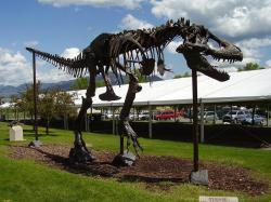 """Bronzová replika kostry druhu Tyrannosaurus rex zvaná """"Big Mike"""", původní exemplář nese označení MOR 555 (nově USNM 555000). Právě ve fosiliích tohoto tyranosaura z Montany byla v nové studii z letošního roku nejspíš potvrzena přítomnost """"měkkých tkání"""" a původních organických molekul. Kredit: Vlastní snímek autora; Wikipedie (CC BY-SA 4.0)"""