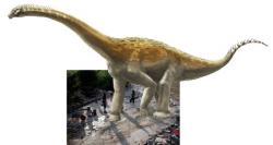 Ilustrace přibližného vzhledu původce fosilní série stop v Plagne s pozadím v podobě fotografie otisků. Velikost sauropodního dinosaura na obrázku by tedy mohla přibližně odpovídat v poměru k velikosti osob na snímku. Kredit: A. Bénétéau (ilustrace), Dinojura (foto).