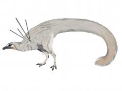 Mezi nejbizarnější dinosaury, představené v loňském roce, patří nepochybně malý kompsognatidní teropod druhu Ubirajara jubatus. Malý opeřený dravec obýval území současné Brazílie v období rané křídy a jeho tělo zdobil nádherný pernatý háv. Nejzajímavějším rysem jeho tělního pokryvu jsou pak dva páry dlouhých a rovných per, která mu nápadně vyčnívala po obou stranách jeho hřbetu. Kredit: Luxquine; Wikipedia (CC BY-SA 4.0)