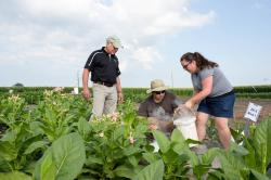 Vedoucí kolektivu Don Ort (vlevo) se svými kolegy Paulem Southem (uprostřed) a  Amandou Cavanagh (vpravo) prověřují, jak se jejich mutanti mají k světu. Tabák si k pokusům zvolili proto, že se řadou vlastností, například vysokou hustotou listového pokryvu, podobá zemědělsky významným plodinám. Kredit: Claire Benjamin/RIPE Project.