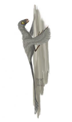 Rekonstrukce pravděpodobného vzezření mláděte druhu Scansoriopteryx heilmanni, formálně popsaného roku 2002. Při délce kolem 16 centimetrů byl tento jurský opeřený dinosaurek z Číny zhruba stejně velký, jako dnešní vrabec domácí. Kredit: Matt Martynyuk, Wikipedie (CC BY 3.0)