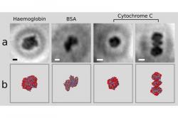 Nahoře první snímky molekul proteinů, dole jejich modely podle rentgenové krystalografie. Kredit: Jean-Nicolas Longchamp / University of Zurich.