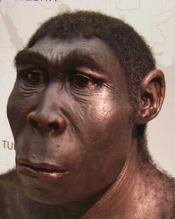 O délce existence druhu Homo erectus si zatím můžeme jen nechat zdát. Kredit: Lillyundfreya / Wikimedia Commons.